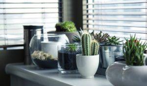 Green living – Qualität, die sich sehen lassen kann